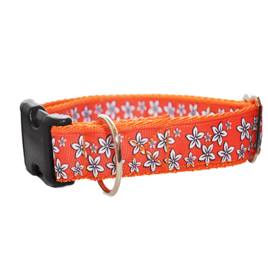 Orange Daisy Flowers Dog Collar - Custom Dog Collars