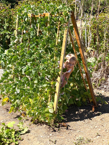How to DIY a Vine Tent in Your Garden