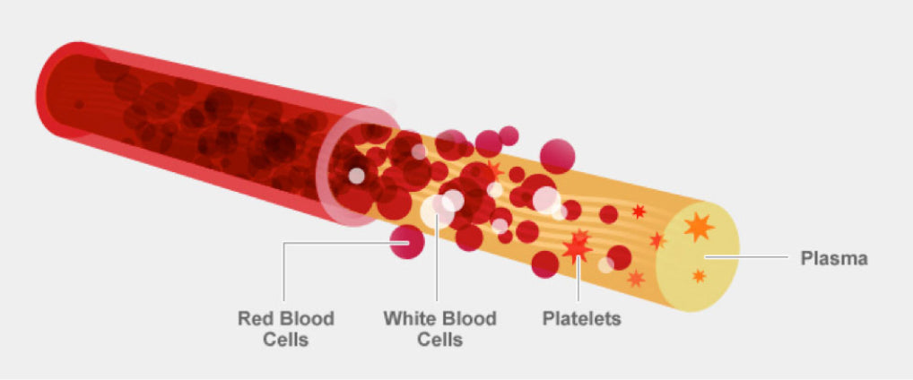 blood components new