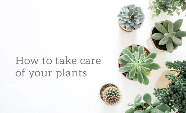 Life Indoors: How to take care of your plants