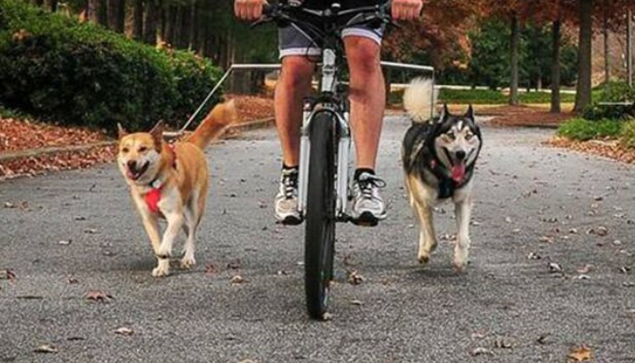 RLTgear™ Dog Bicycle Leash Hands Free Best Pet Training Walker