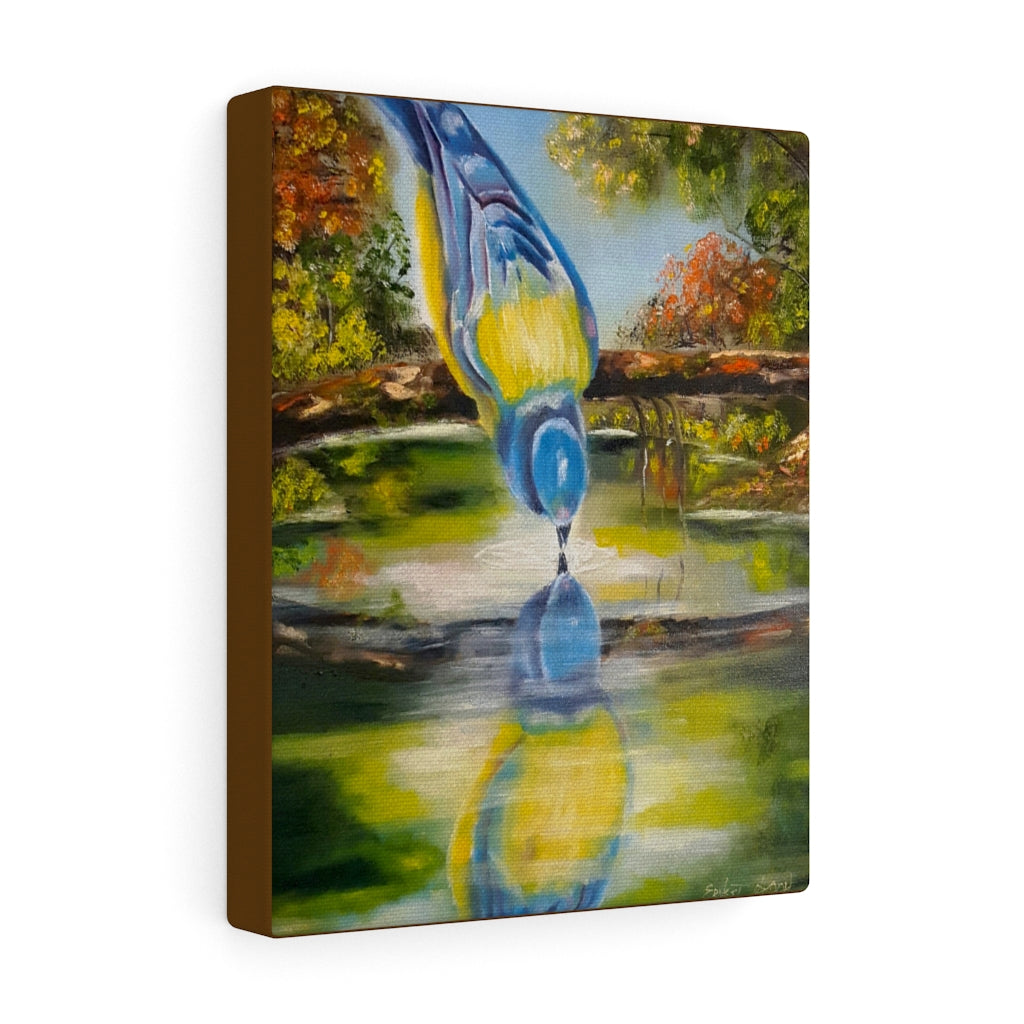 Blue Bird Drinking Water Canvas Gallery Wraps