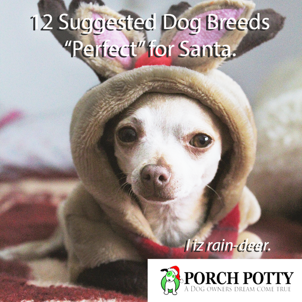 "12 Suggested Dog Breeds ""Perfect"" for Santa"