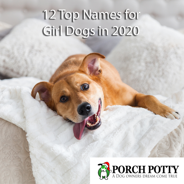 12 Top Names for Girl Dogs in 2020