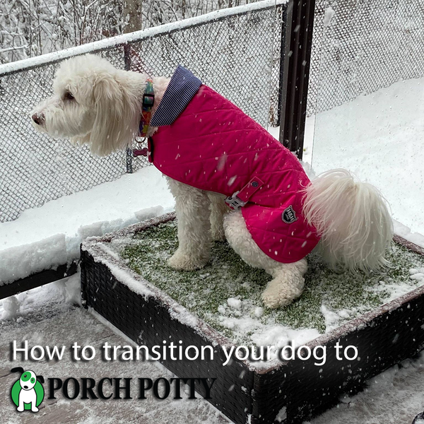How to transition your dog to Porch Potty