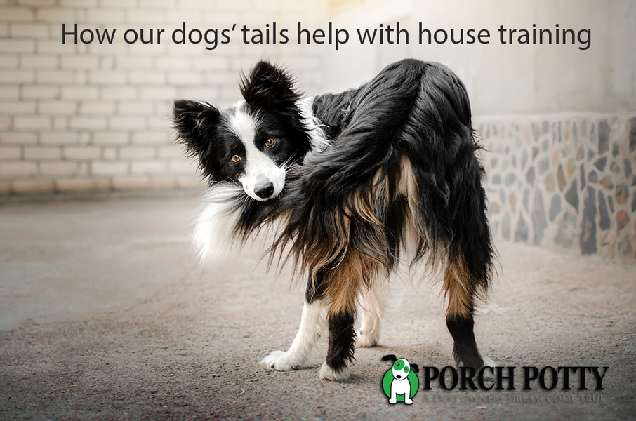 The Tail and Potty Connection: how reading your dog's body language can help with house training