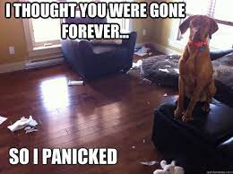 Dog with separation anxiety destroys house