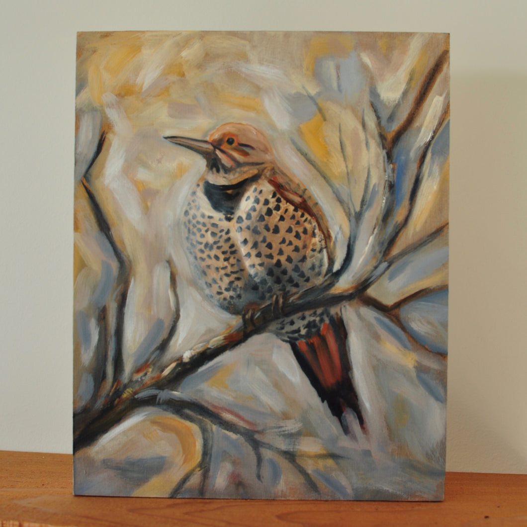 Northern Flicker - 8