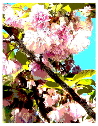 Free Cherry Blossom Digital Download Art Print