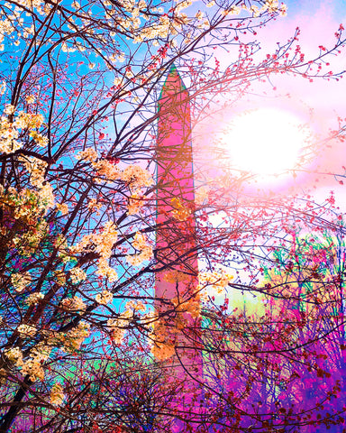 Art Prints -- DC Monument Blossoms
