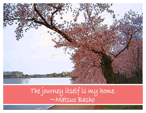 Photograph -- Cherry Blossoms Basho The Journey