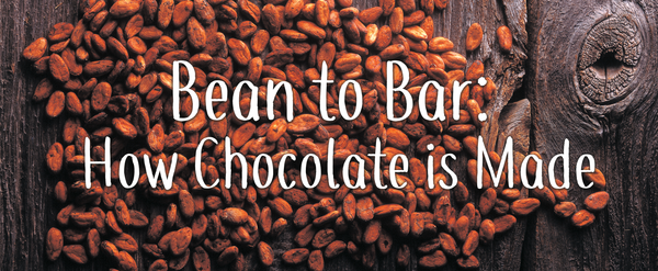 Bean to Bar: How Chocolate is Made