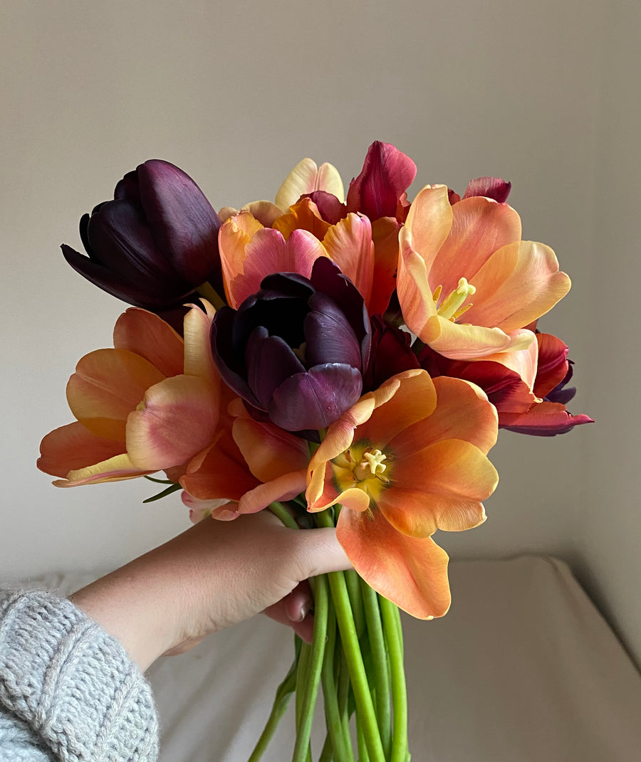 Tulip Bouquet (in-store pick-up or local delivery only)