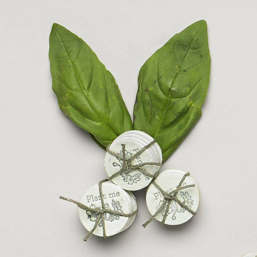 basil mint herb seed coins