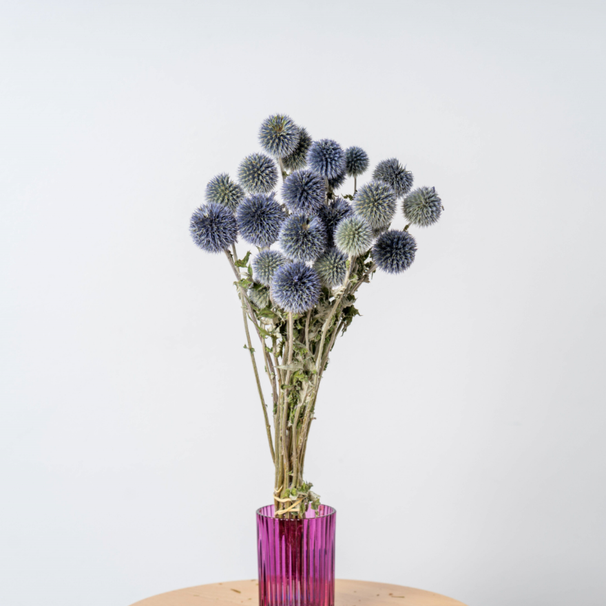dried globe thistle blue