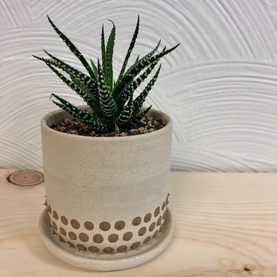 ceramic spiky planter