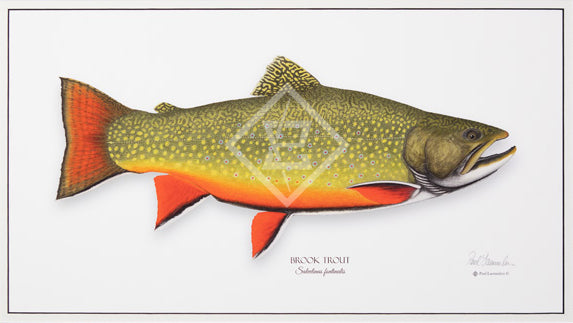 Trout Giclee Prints (non-Framed) By Paul Laemmlen