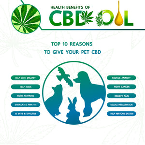 What Pets Can You Give CBD To?