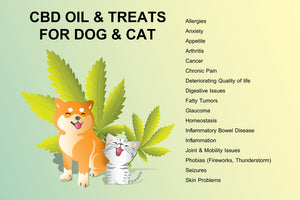 Benefits of CBD for Cats and Dogs