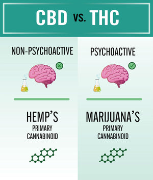 Differences between CBD and THC - Learn which is Psychoactive and which is not.