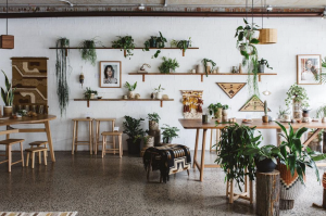 The Plant Room - Manly