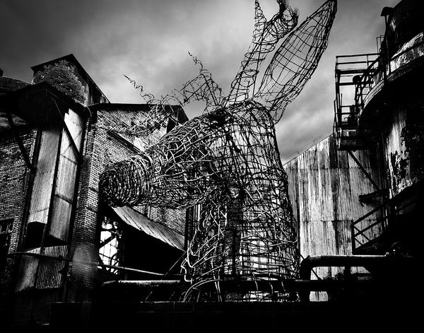 Carrie Furnace: Deer