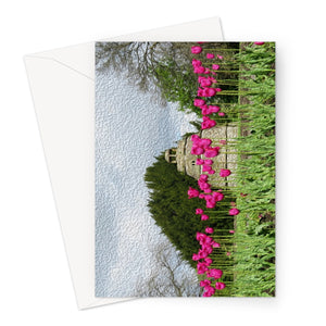 Tulips (oil) Greeting Card
