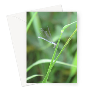 Dragonfly Close Up - Greeting Card