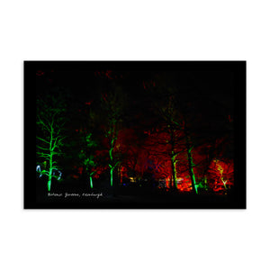 Botanic Night Woods Postcard