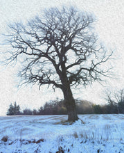 Load image into Gallery viewer, Winter Treescape Greeting Card