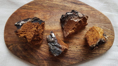 Facts about Chaga You Didn't Know