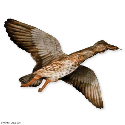 Mallard Hen - Decoy Kite
