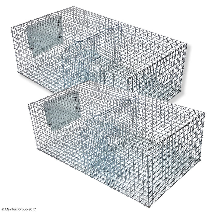 Sparrow Trap - Multi Capture - 2 Pack