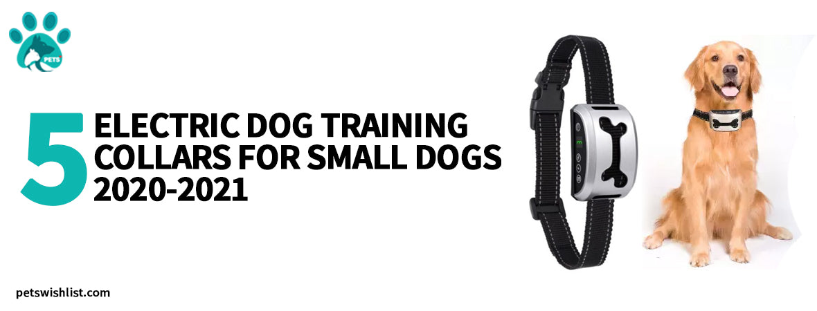 5 Electric Dog Training Collars For Small Dogs 2020-2021