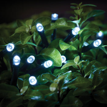 Cole & Bright Solar LED String Lights – White - DeWaldens Garden Centre