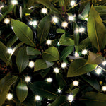 Cole & Bright Solar LED String Lights – Warm White - DeWaldens Garden Centre