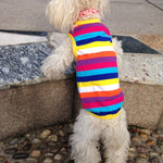 Colorful Spring Dog's Shirt - Fluffy Palace