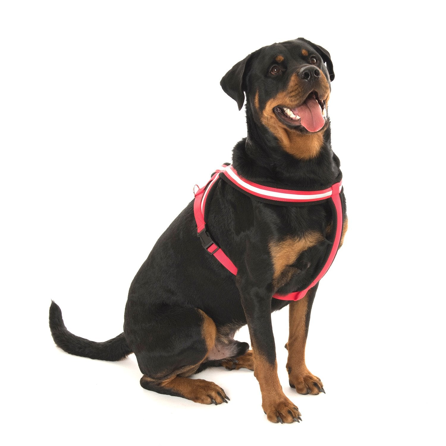 COA Comfy Harness - Fluffy Palace