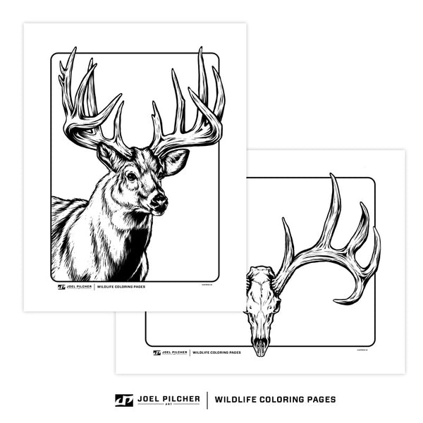 Wildlife Coloring Pages - Bucks Birds Bass