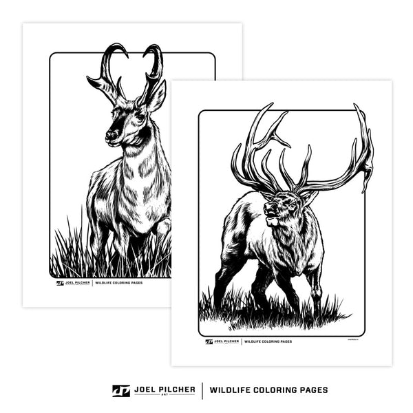Wildlife Coloring Pages - Big Game Variety