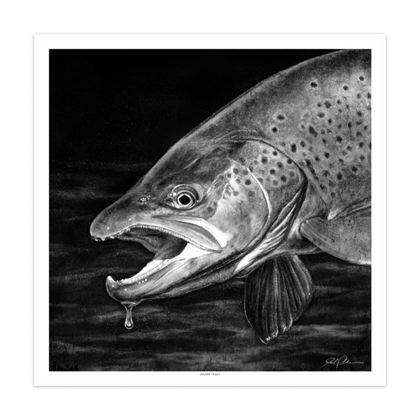 """Brown Trout"""