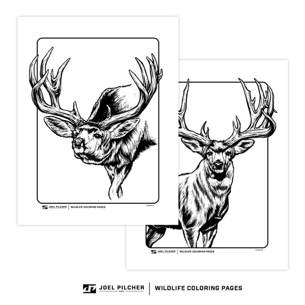 Wildlife Coloring Pages - Elk and Mule Deer