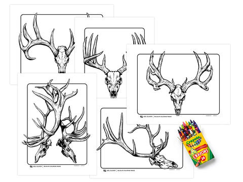Wildlife Coloring Pages - Skulls
