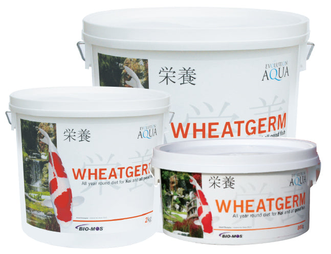 Evolution Aqua Wheatgerm 6000g 5-6mm