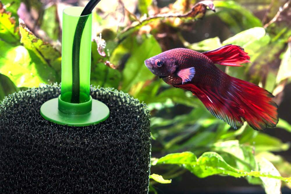 Sponge Filters: The Easiest Fish Tank Filter Ever