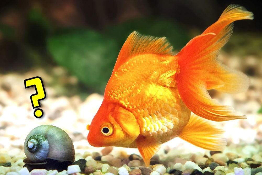10 Best Tank Mates for Your Goldfish