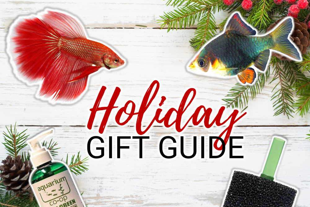 10+ Holiday Gift Ideas for Your Favorite Fish Keeper