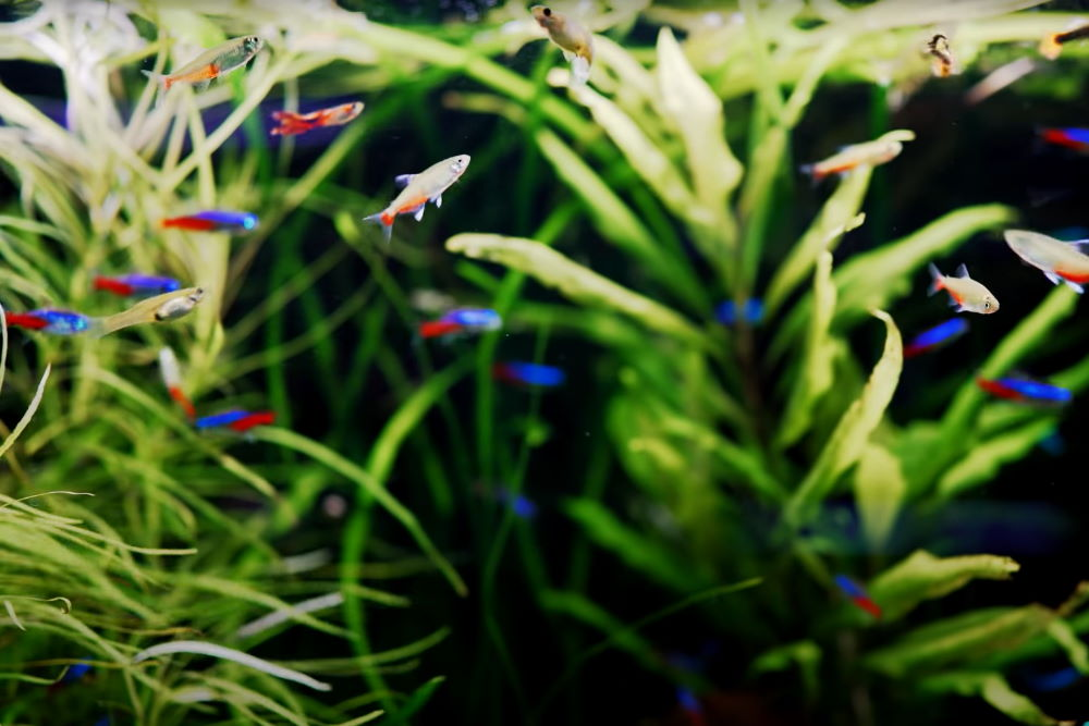 5 Best Fish Tank Ideas for a 20-Gallon Aquarium