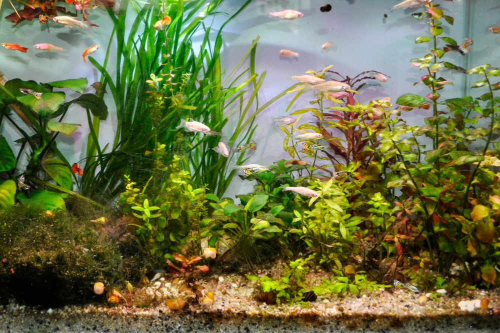 What is Mulm or Detritus in Aquariums?