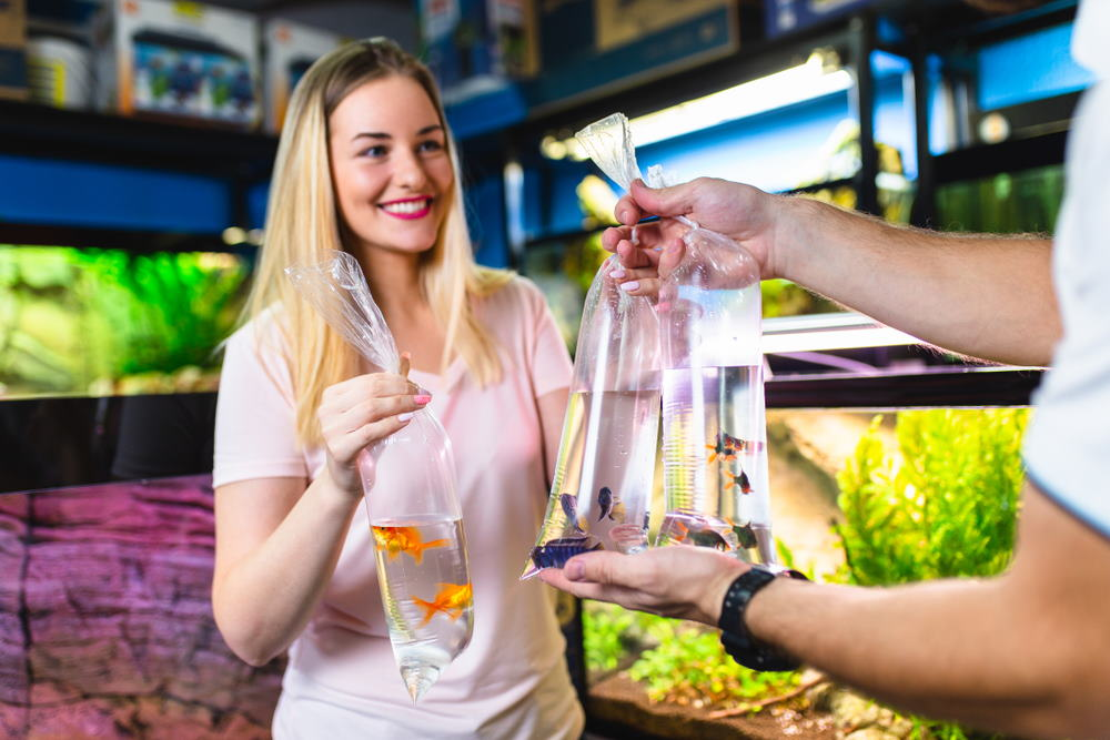 How to Breed Aquarium Fish for Profit